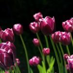 Segenswunsch: Ostern und Frühling