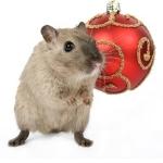 Weihnachtsmuffel, Weihnachtsmaus, Weihnachtsstress
